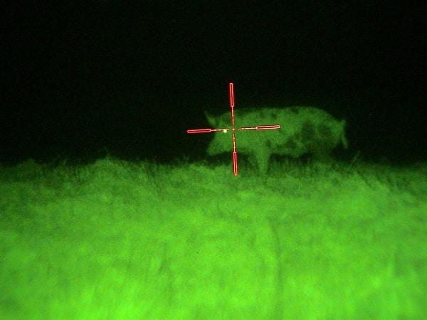 hunting hog at night